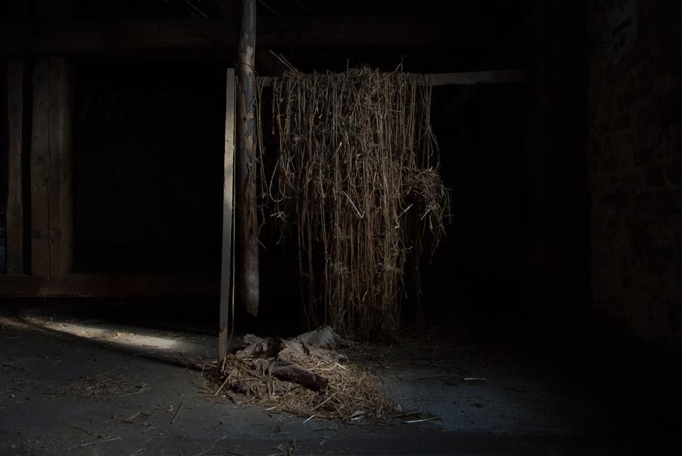 Täglich Brot, Serie 3, 2017, Bild 1, Abendluft, Fotografie, 40 x 60 cm, Zu sehen ist das Dämmern über den Federn, auf denen geerntet wird. Die Staubwolken werden vom Mähdrescher gezogen. Die Motive der Serie entstanden bei Begleitung der Getreideernte 2017. Der Serie zu Grunde liegt die Frage danach, was für den Menschen in Wirklichkeit wichtig ist, wovon er lebt, was er braucht und wie er seine Wahrnehmung beschaffen ist. Anna Ullrich, Das Copyright © 2017 des Bildes liegt bei Anna Ullrich. Alle Rechte vorbehalten.