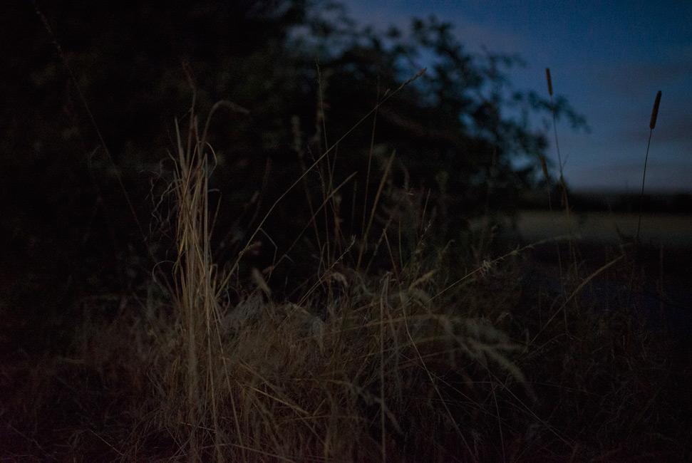 Täglich Brot, Sommer, Serie 4, 2019, Fotografie, 70 x 100 cm, Zu sehen ist ein Naturstilleben mit den Pflanzen eines Knicks im Vordergrund, im Hintergrund ein Getreidefeld. Aufgenommen wurde es in einer Vollmondnacht im Sommer. Die Jahreszeiten stehen für das Zyklische im Leben. Die Motive der Serie entstanden 2019. Der Serie zu Grunde liegt die Frage danach, was für den Menschen in Wirklichkeit wichtig ist, wovon er lebt, was er braucht und wie er seine Wahrnehmung beschaffen ist. Anna Ullrich, Das Copyright © 2019 des Bildes liegt bei Anna Ullrich. Alle Rechte vorbehalten.
